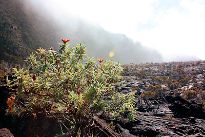 Early morning mist in the Enclos Foucque, Piton de la Fournaise, Ile de la Reunion, September 2009
