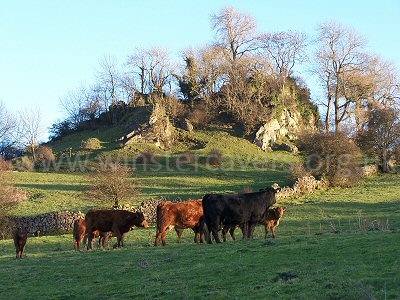 A typical Derbyshire scene near Winster, with rugged limestone scenery and grazing cattle