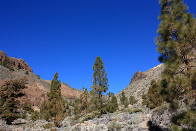 View looking up one of the barrancos on Mount Teide, Tenerife, January 2011